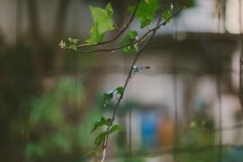 kat διακόσμηση κήπου 004
