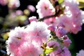 kip πολύχρωμος κήπος φυτά 006